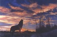 Sky Wolf Fine-Art Print