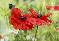 Poppies And Butterfly Fine-Art Print