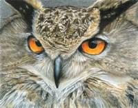 Orange-Eyed Owl Fine-Art Print