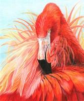 Red Flamingo Fine-Art Print