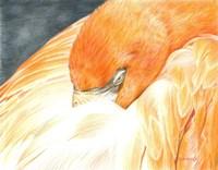 Sleeping Flamingo Fine-Art Print