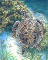 Swimming Turtle Fine-Art Print