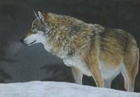 A Cold Winters Night Fine-Art Print