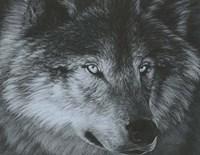 Dark Wolf Fine-Art Print