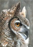 Sepia Owl Fine-Art Print