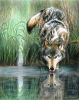Afternoon Reflection Fine-Art Print