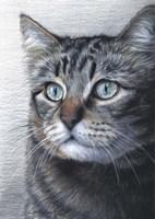Cat Portrait Fine-Art Print