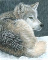Cold Evening Fine-Art Print