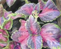 Purple Flowering Plant Fine-Art Print