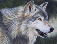 Timber Wolf Dark Fine-Art Print