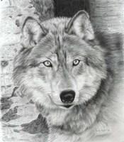 Watchful Eyes Fine-Art Print