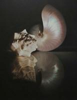 Pearl Nautilus Fine-Art Print