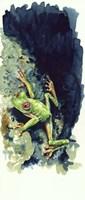 Costa Rican Frog Fine-Art Print