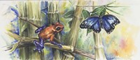 Blue Morpho Fine-Art Print