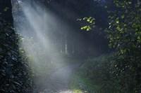 Beam of Light Fine-Art Print