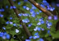 Blue Little Flowers Fine-Art Print