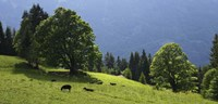 Green Mountainscape cropped Fine-Art Print