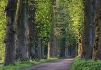Light Green Forest Road Fine-Art Print