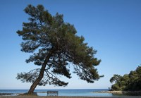 Tree At The Sea Fine-Art Print