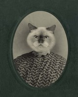 Cat Series #1 Fine-Art Print