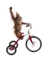Monkeys Riding Bikes #2 Fine-Art Print