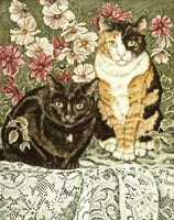 Cosmos & Lace Fine-Art Print