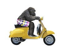 Monkeys Riding Bikes #4 Fine-Art Print