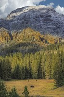 Bison Grazing In The Yellowstone Grand Landscape Fine-Art Print