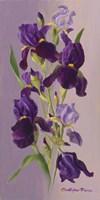 Study In Lavender Fine-Art Print