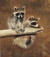 Raccoons Fine-Art Print