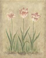 Blooming Tulips I Fine-Art Print