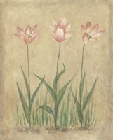 Blooming Tulips II Fine-Art Print