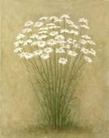 Floral C Fine-Art Print