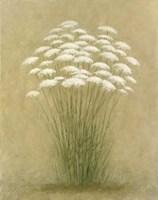 Floral D Fine-Art Print