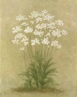 Floral E Fine-Art Print