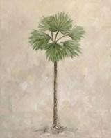 Palm Tree 3 Fine-Art Print