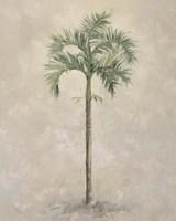 Palm Tree 4 Fine-Art Print