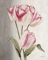 Parrot Tulips Fine-Art Print