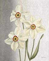 Spring Narcissus Fine-Art Print