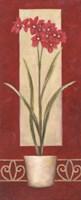 Red Flower In Pot Fine-Art Print