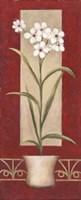 White Flowers In Pot Fine-Art Print