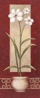 White Flowers In Pot 2 Fine-Art Print