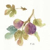 Orchard Bloom III Fine-Art Print