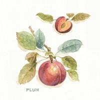 Orchard Bloom IV Fine-Art Print