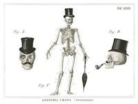Dandy Bones Fine-Art Print