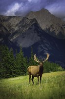 Elk Against Mountainside Fine-Art Print