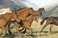 Brown Wild Horses Running Fine-Art Print
