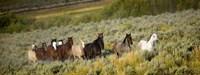 Horses Running through Weedy Field Fine-Art Print