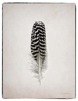 Feather I BW Fine-Art Print