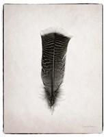 Feather III BW Fine-Art Print